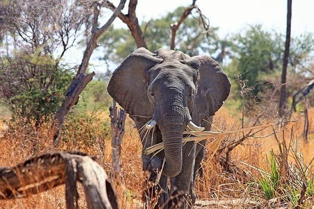 zuid-afrika5