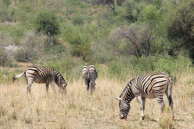 zuid-afrika6