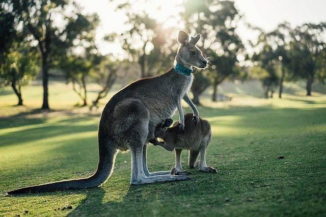 australia-1180394_640