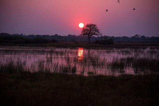 botswana-1022405_640