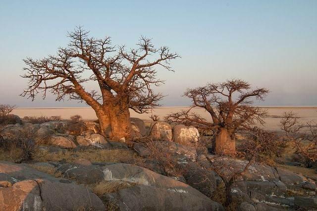 botswana-694485_640