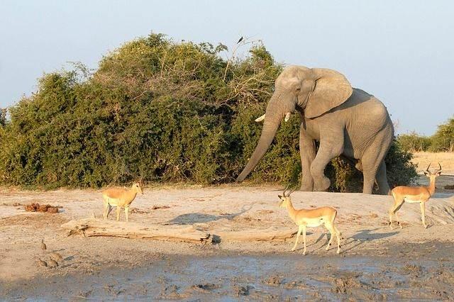 elephant-693434_640