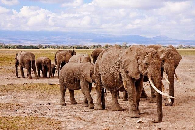 elephants-458990_640