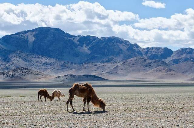mongolia-1041538_640