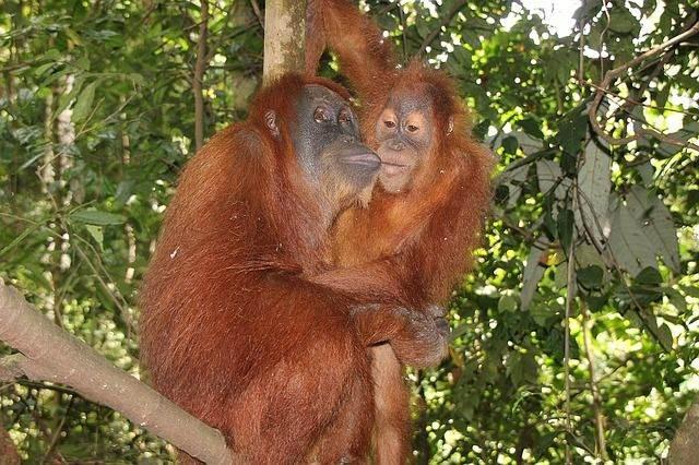 monkey-1328594_640