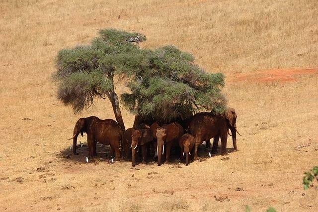 safari-111698_640