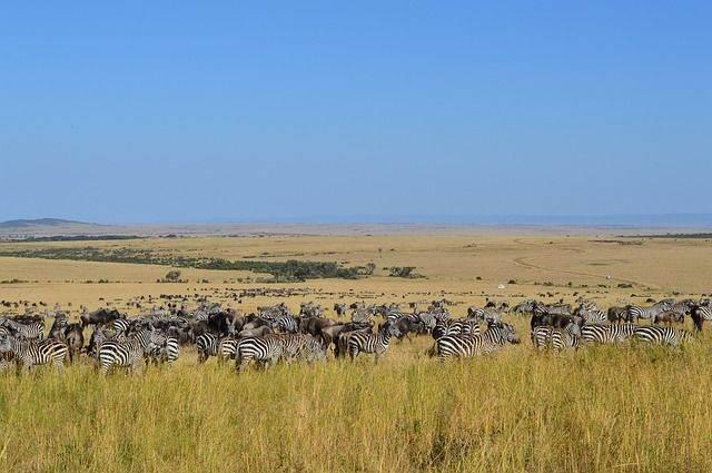 safari-915410_640