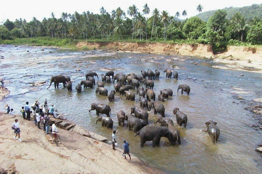 Rondreis Sri Lanka, een prachtig eiland midden in de Indische Oceaan.
