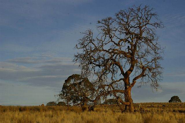 tree-517412_640