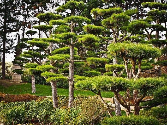 trees-1105991_640