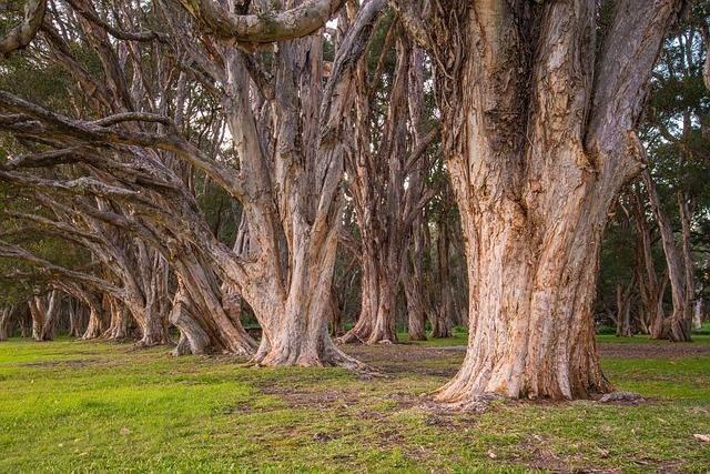 trees-340750_640