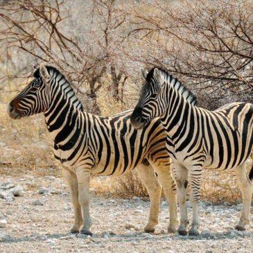 De 4 mooiste wildparken van Zambia