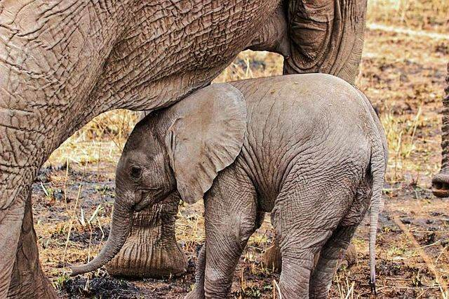 elephant-285828_640