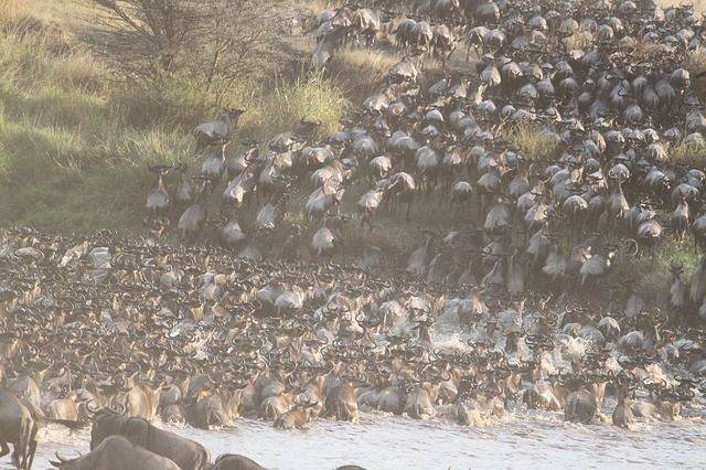 great-migration-1021460_640