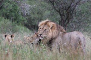 3 mooiste Nationaal Parken van Tanzania