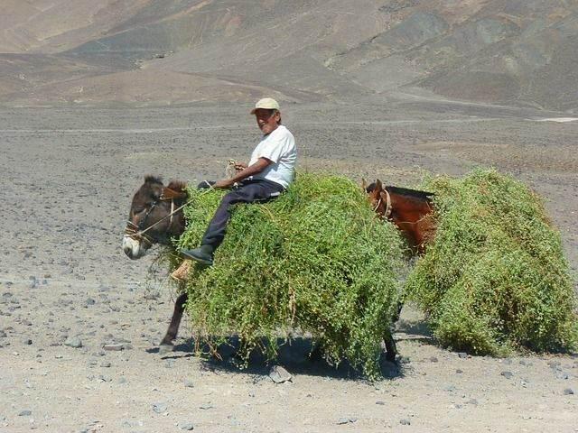 peruvians-43244_640