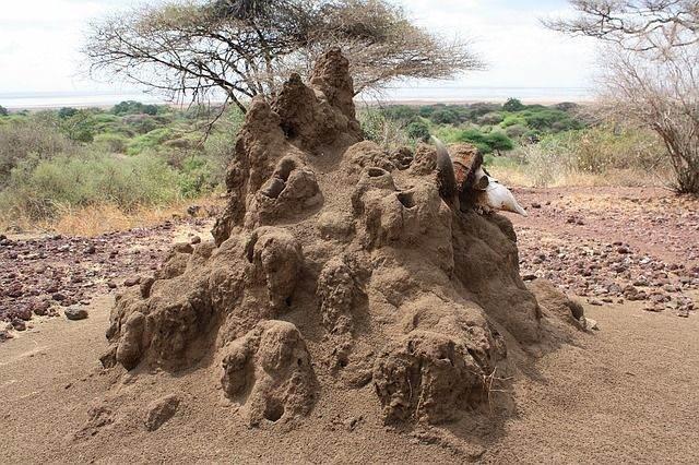 termitiera-1255294_640