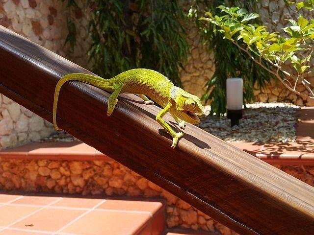 the-lizard-1234214_640
