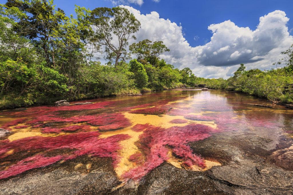 De Colombiaanse regenboogrivier