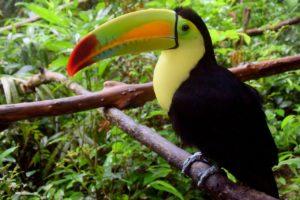 Rondreis Belize