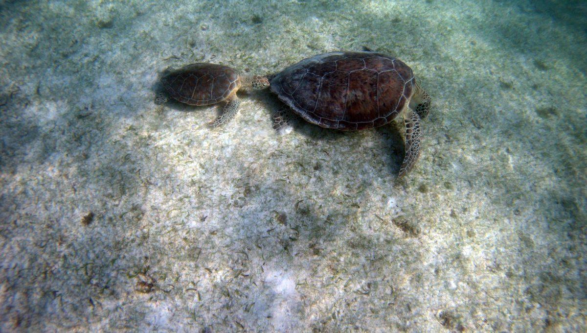 snorkelen Yucatan Mexico
