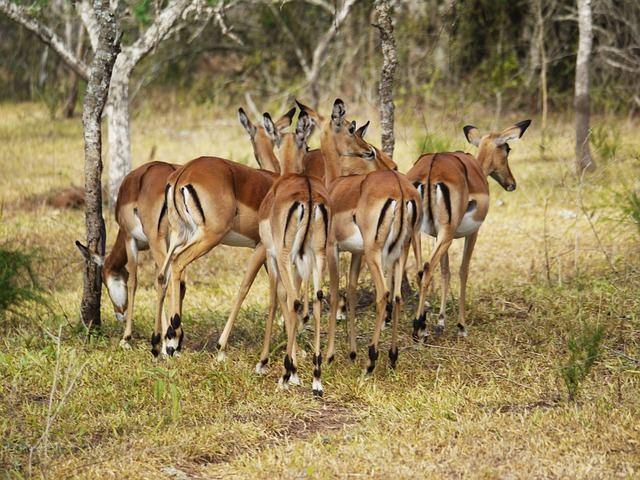 antelope-1536878_640