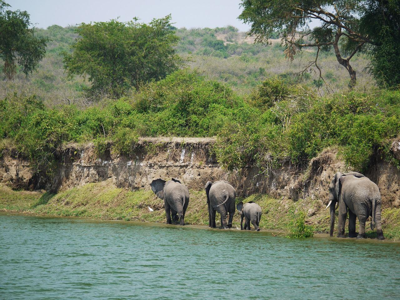 elephant-1535877_1280