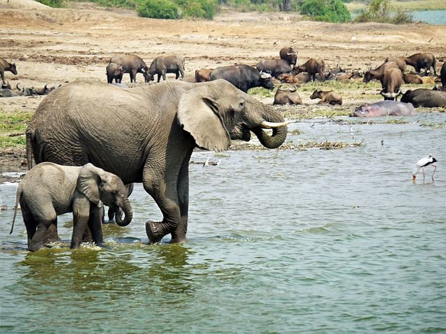 elephant-1535882_640