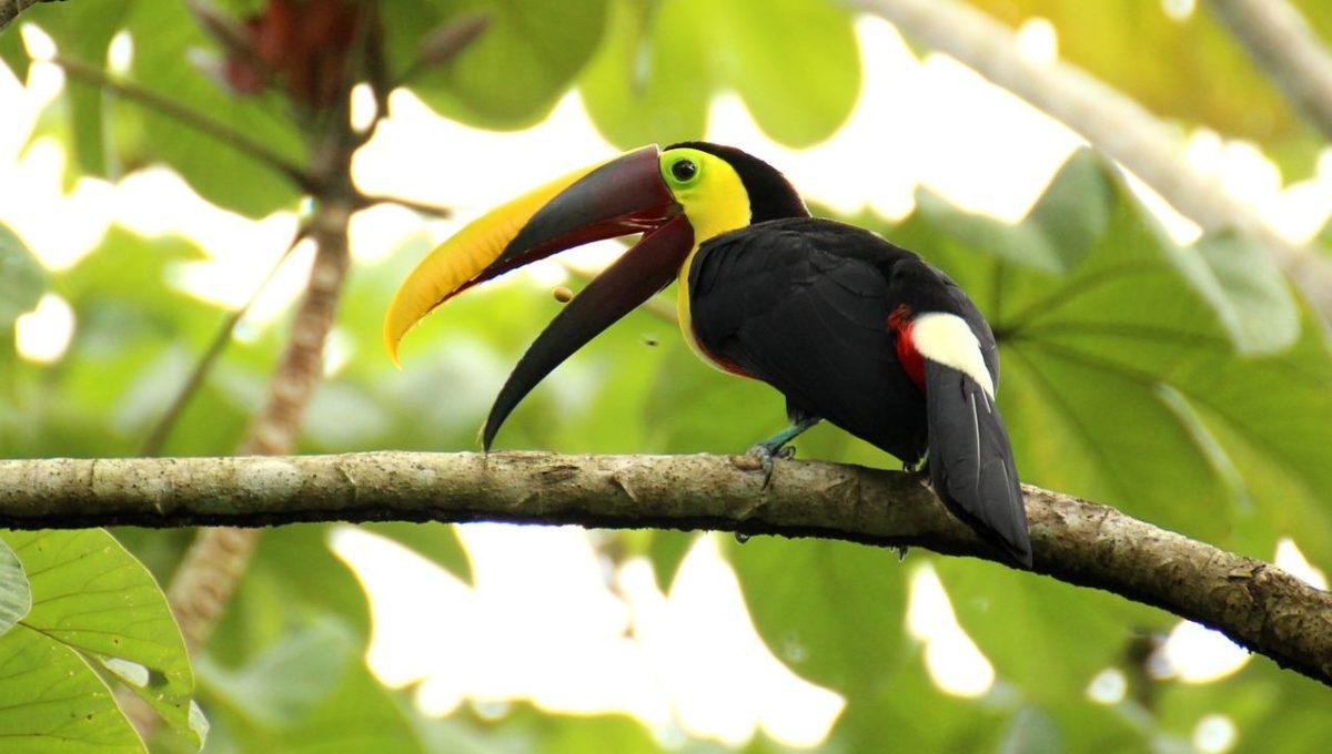 Vakantie Manuel Antonio Costa Rica