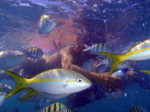 scuba-diving-1211601_640