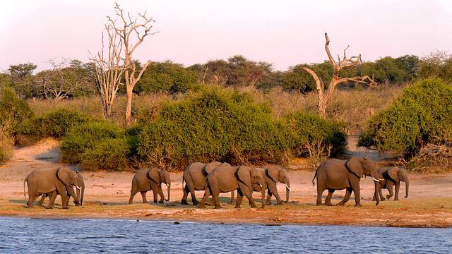 Rondreis Botswana
