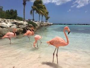 Rondreis Aruba