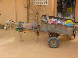 Rondreis Senegal