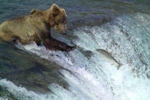 Rondreis Alaska