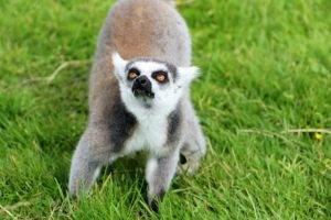 Rondreis Madagascar