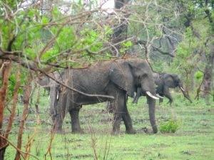 Rondreis Malawi