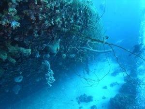 Rondreis Bonaire