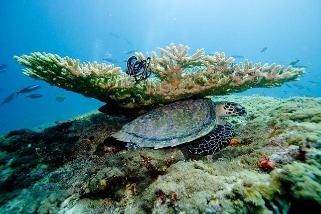 Rondreis Malediven