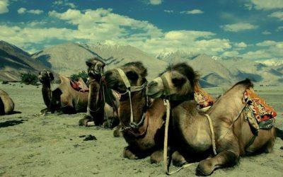 camel-489299_640