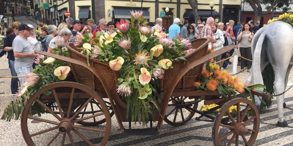 flower-2415477_1280