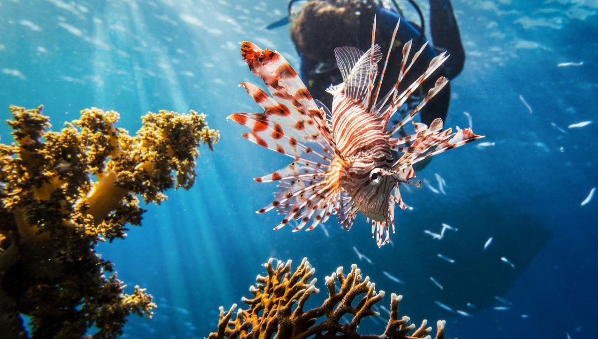 Een duikvakantie Rode Zee