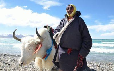 tibet-895491_640