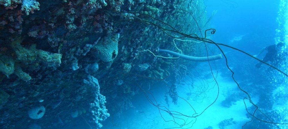 scuba-diving-2317126_1280