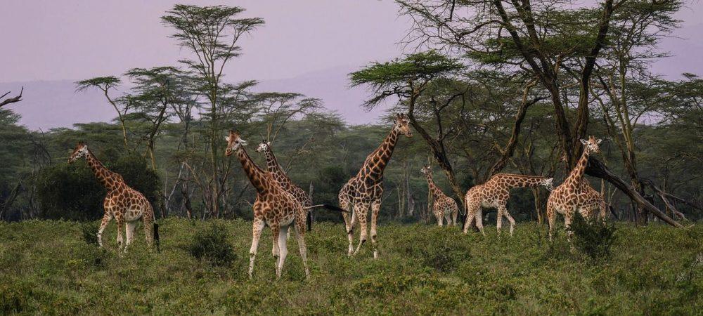 rondreis kenia