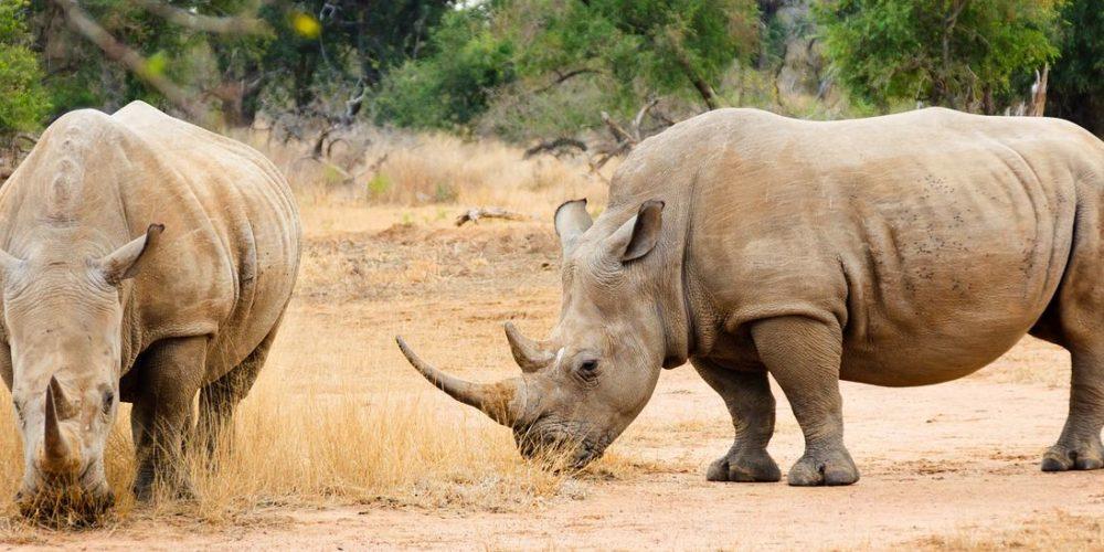 swaziland-2637414_1280