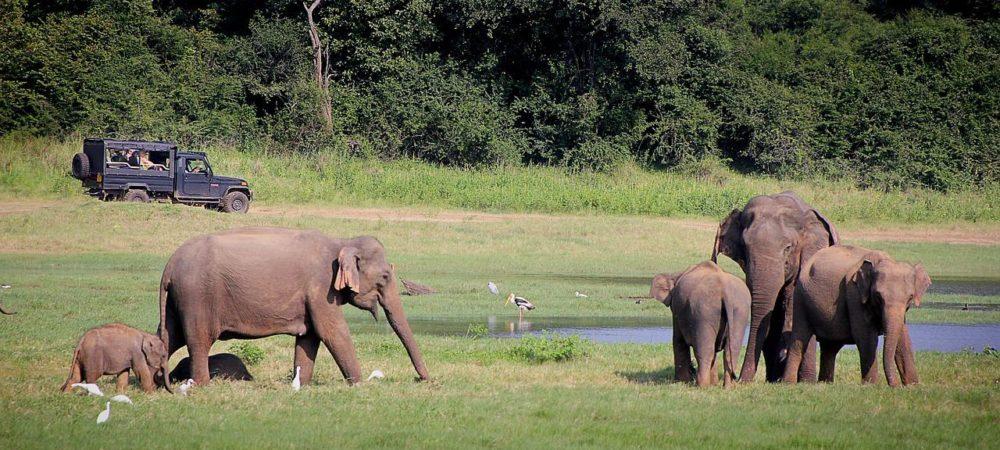 elephant-2131326_1280