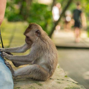 Bali Zoo: dieren, activiteiten en prijzen