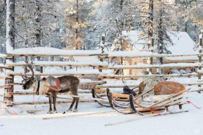 Zeven dagen in Fins Lapland