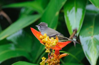 Wandelen en vogels kijken op Grand Cayman