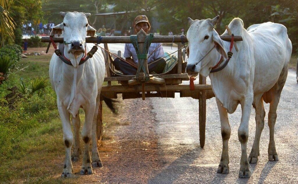 Bespaartips Cambodja